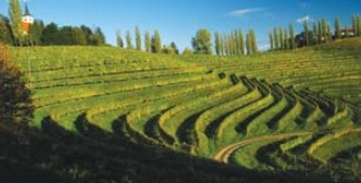 P & F Wineries - Podravje